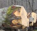 2013年4月份供应欧洲白像原木