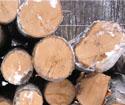 2013年1月份出售桦木到中国的立陶宛高档原木