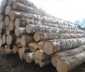 2012年下半年新伐,乌克兰AB级桦木