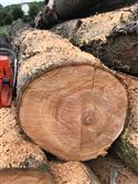 中国尚高木业可信网站