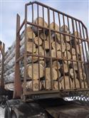 2017年2月供应AB级俄罗斯新鲜砍伐桦木原木货到满洲里