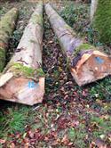 2017年2月供应烘干云杉板材,木方及各种规格定做加工