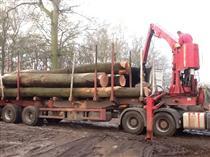 2018年3月供应法国榉木,新砍伐材旋切级榉木原木