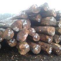 尚高木业欧洲堆场准备出货的枫木原木,图片为现场拍摄