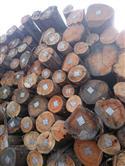 2017年12月供应500方巴西桉木,现货可快速出货