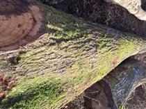 2018年3月尚高木业供应欧州红橡原木供应,在法国有专职接待同事