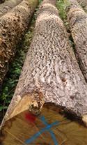 尚高木业:2017年8月供应德国ABC级白橡原木