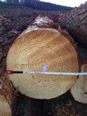 2014年下半年供应优质智利辐射松原木可售数量2000方