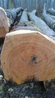 2018年4月供应法国红橡原木,红橡原木家具的优点