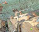 2013年2月份出售到中国的比利时高档榉木